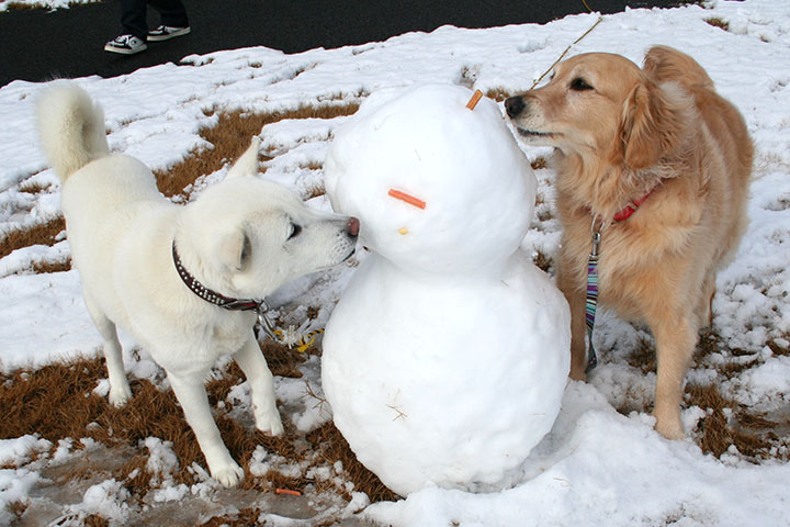 雪だるまとシロ君と愛ちゃん